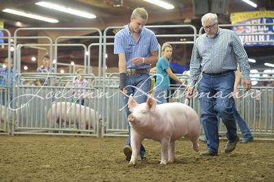 Hog Show - York, Duroc, OPB Ringshots