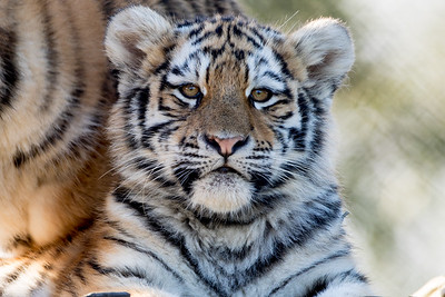 Colchester Zoo 09-11-19