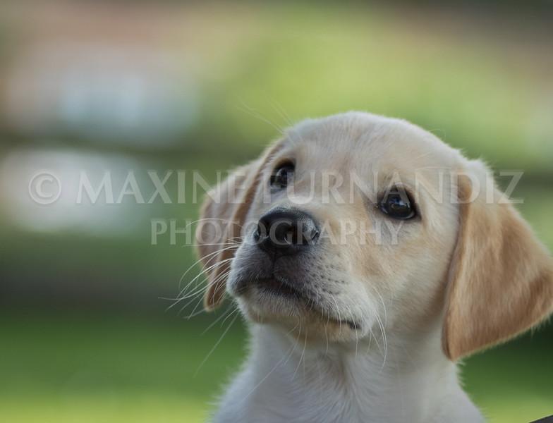 Dogs-5807.jpg