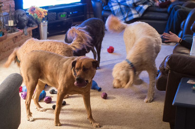 20161125-Dogs snacking-PMG_4760.jpg
