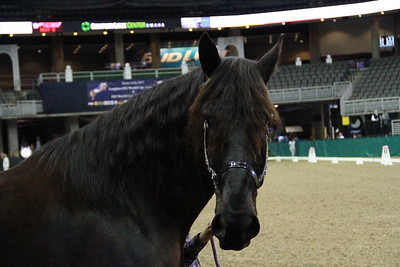 2016 Gallery of Breeds