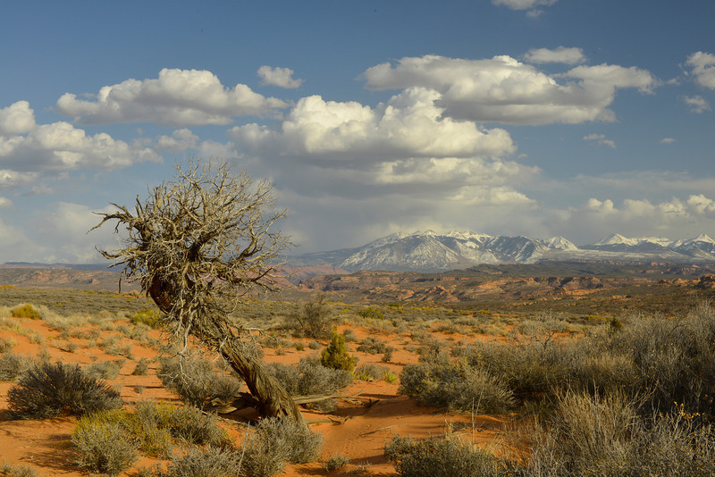 La Sal Mountains, Arches National Park