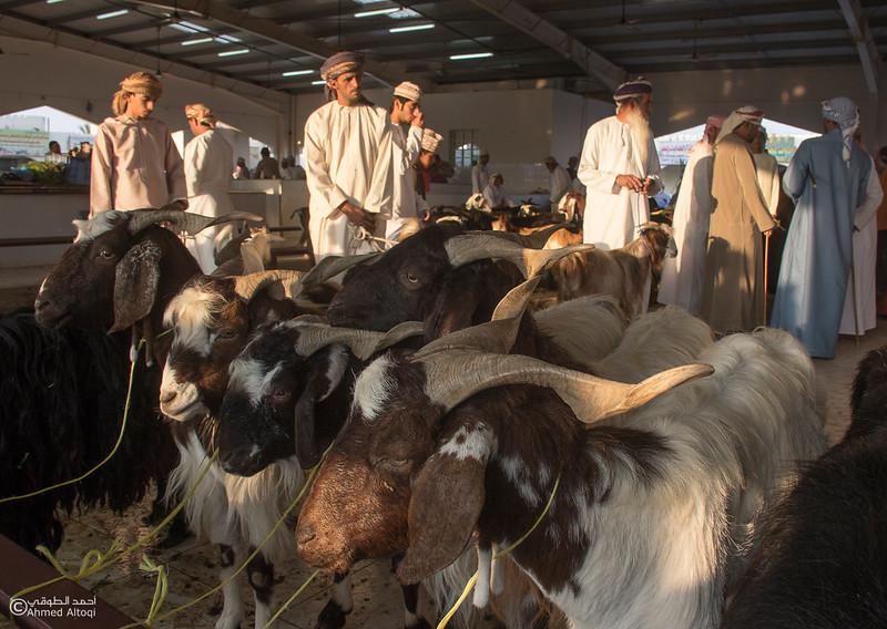Traditional market (67)- Oman.jpg