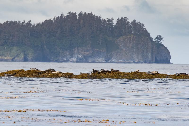 Alaska 2015 - Sitka -  072515-023.jpg