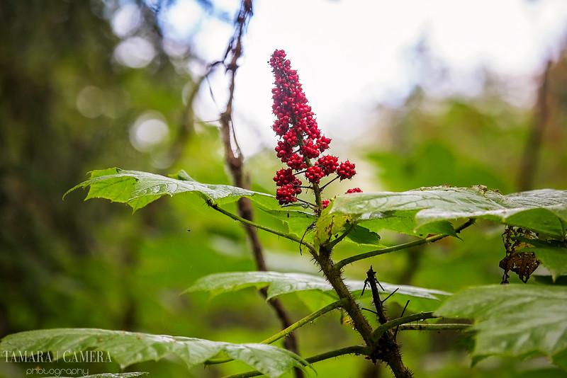 Kincaid_Park_Flower-3-2.jpg