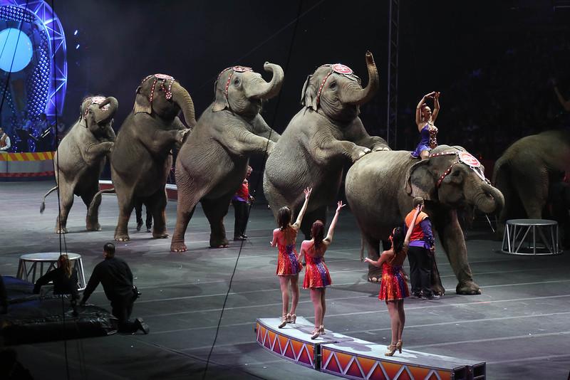 Circus_29.jpg