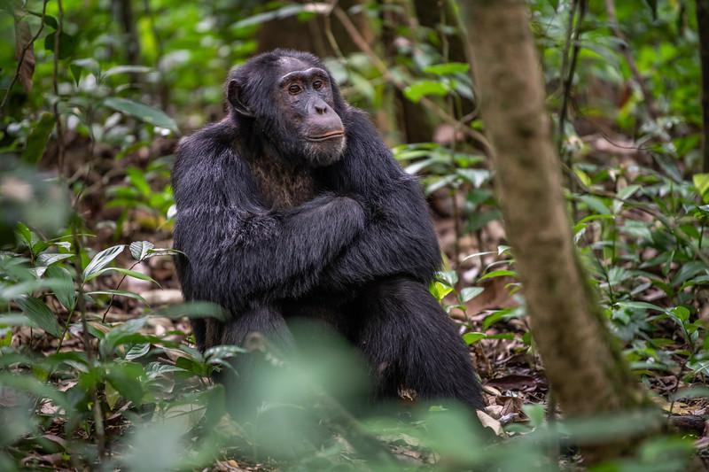 Uganda_T_Chimps-50.jpg