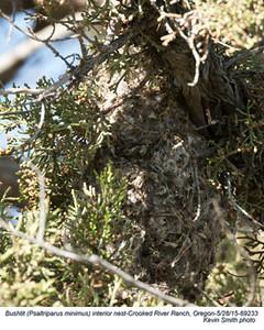 Bushtit Interior Nest 69233.jpg