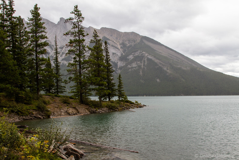 trees and mountains, Lake Minnewanka