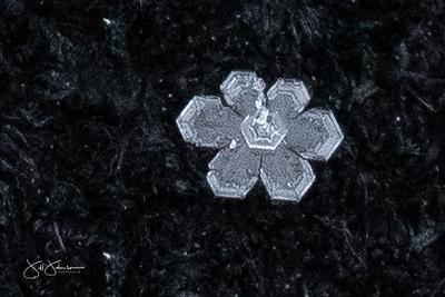 snowflakes-1619.jpg