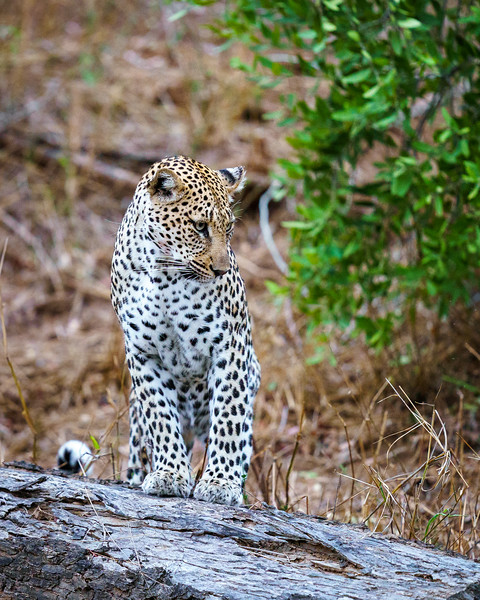 LeopardHills-20191029-2195.jpg