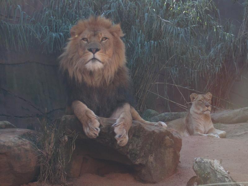 Sydney - Sydeny Zoo-99.JPG