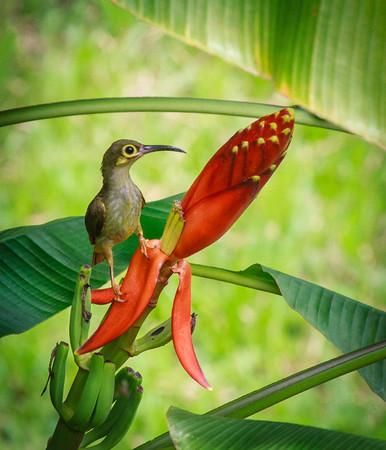 Borneo's Birds, 2013