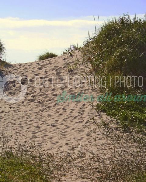 Beach Dune_batch_batch.jpg