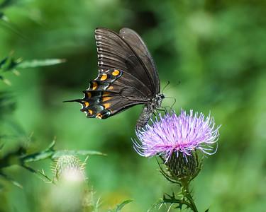 Butterflies & Bees