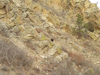 20050212 South cut, bear