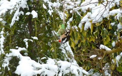 2010 02 Winter Nijverdal