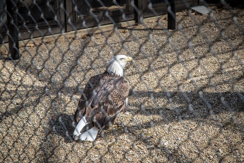Eagle-3064.jpg