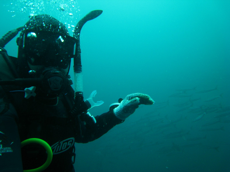 Diving in the Galapagos (276 of 392)