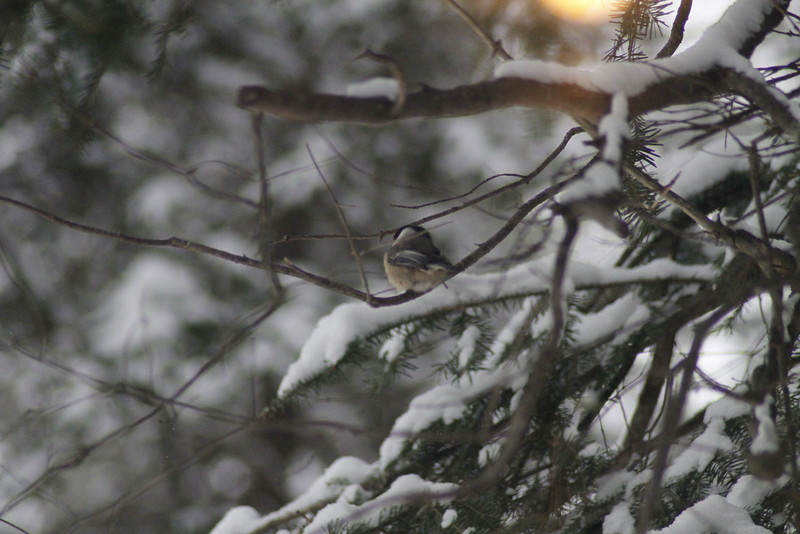 Minnesota/Winter 2015