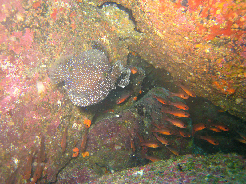Diving in the Galapagos (323 of 392)