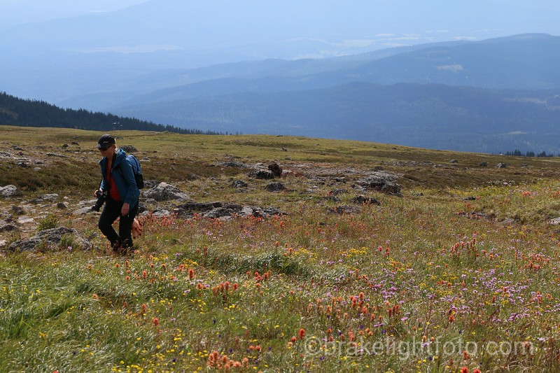 Wild Flowers on Hudson Bay Mountain