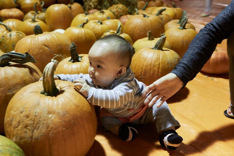 pumpkin__17.jpg