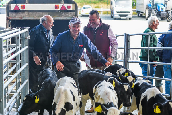 MTH Holsworthy Mart July 2016