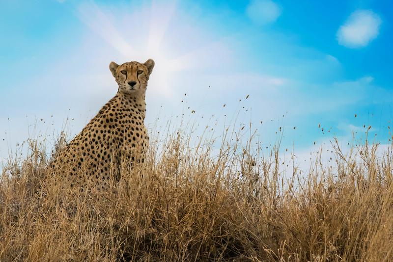 Tanzania-safari-11.jpg