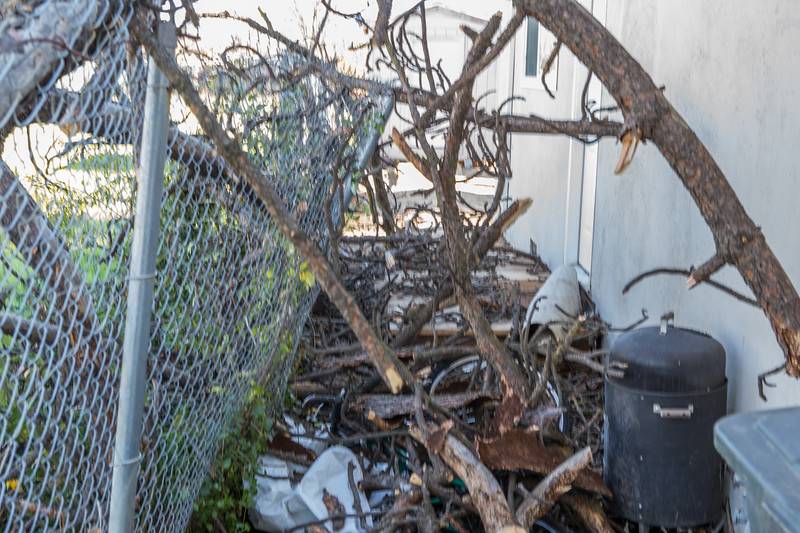 5671 Wallace Ave - Tree 1030am 12 16 2017 Extremly Windy Conditions-9.jpg