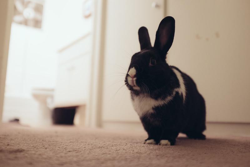 FujiX100T_F2_Focus_Rabbit.jpg