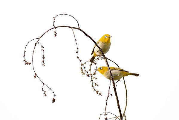 Birds as Art II (2014)