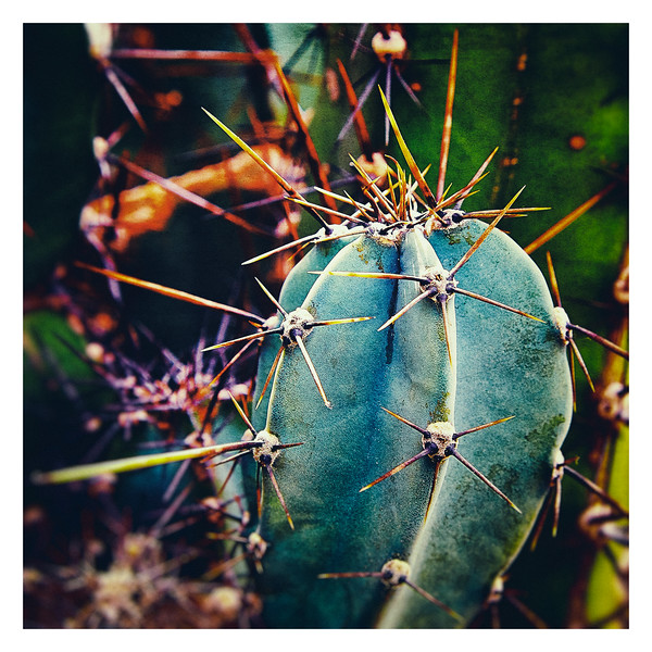 Cactus-long-spines-AF2A7966_.jpg