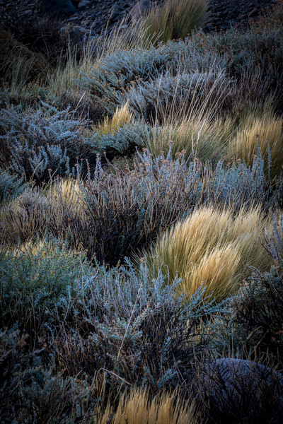 Roadside Plants El Chalten-1.jpg