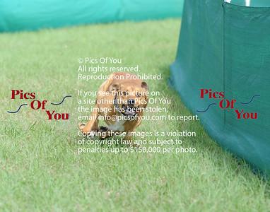 Sunday DOG Trials