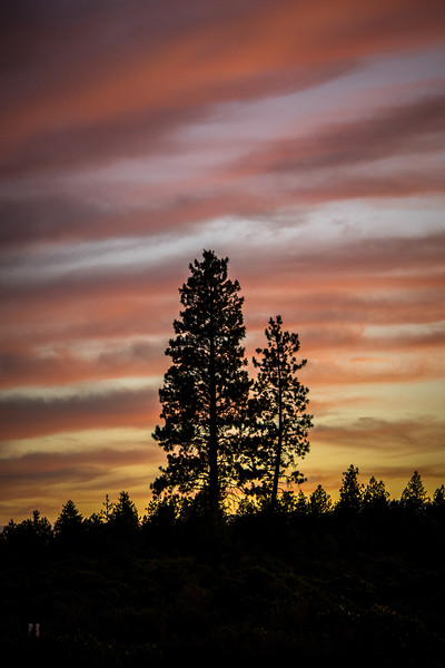Tetherow Trees at Sunset-1.jpg