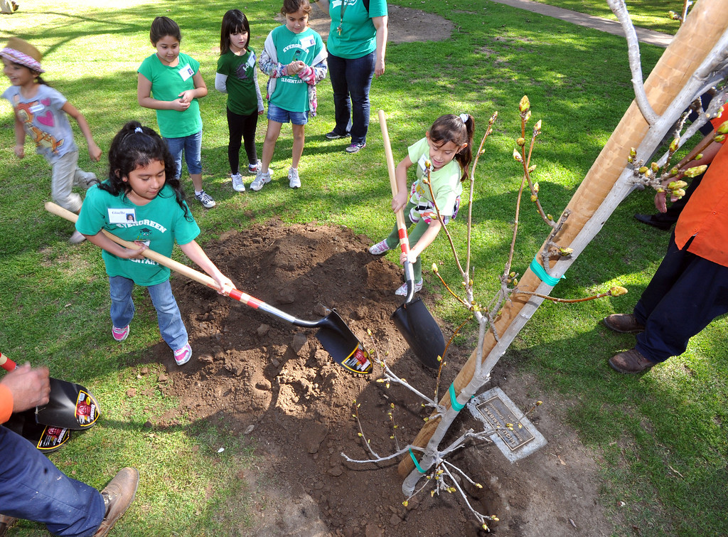 . Students help plant a tree as they celebrate Arbor Day at Penn Park in Whittier on Thursday March 14, 2013. Students meet George Washington, assist in planting a tree and watch tree crews perform their tasks in the park.(SGVN/Staff Photo by Keith Durflinger)