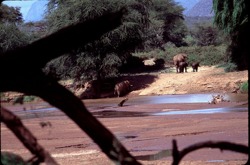 Kenya1_065.jpg