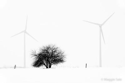 Winter in Black & White