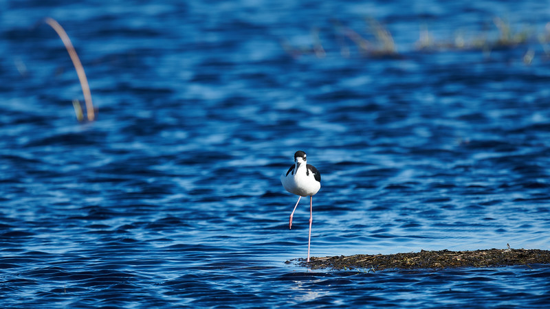 20181103 - Brazoria Wildlife Refuge-85B_4093.jpg