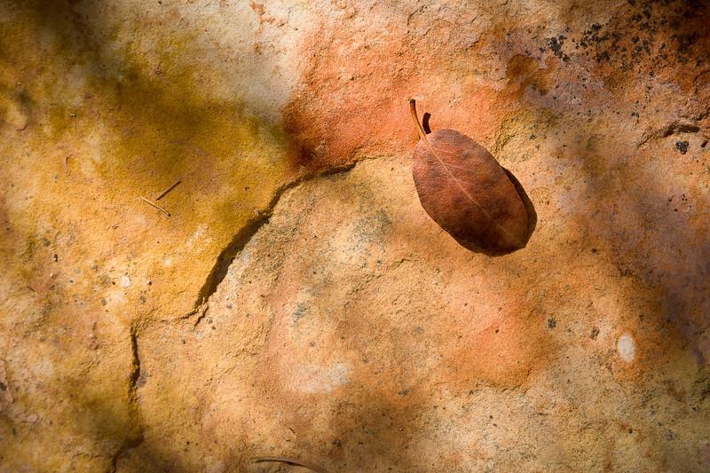 Leaf on Sandstone