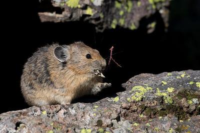 Small and Medium Size Mammals