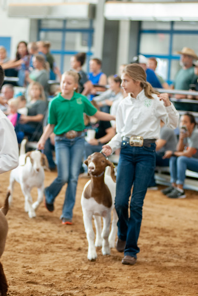 Tulsa_2019_goat_wether_showmanship-9.jpg