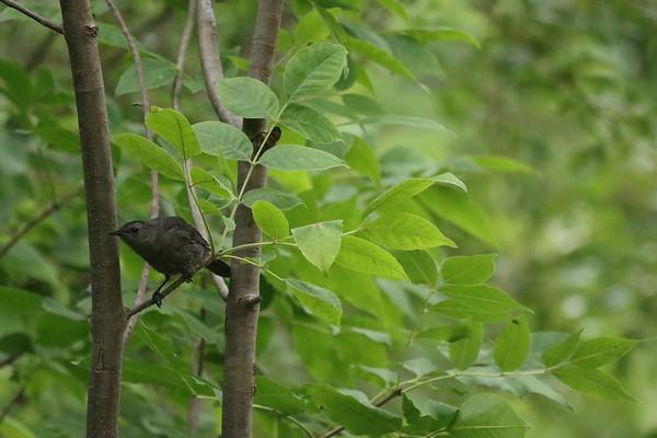 29 July2021 TechnoParc Birds