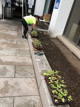 CMHA Planting