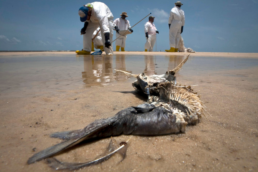 Description of . A decomposed fish lies in the water as workers pick up oil balls from the Deepwater Horizon oil spill in Waveland, Mississippi on July 7, 2010. The trial to decide who should pay for the 2010 Gulf of Mexico oil spill - the worst offshore oil spill in U.S. history began on February 25, 2013 in New Orleans before a federal judge.  REUTERS/Lee Celano