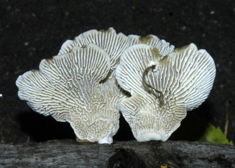 Mycology 009.jpg