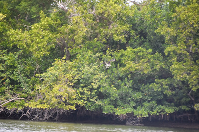 1230PM Heart of Rookery Bay Kayak Tour - Chaney & Ustian