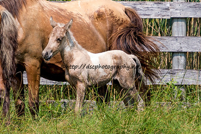 Saltwater Taffee's Filly
