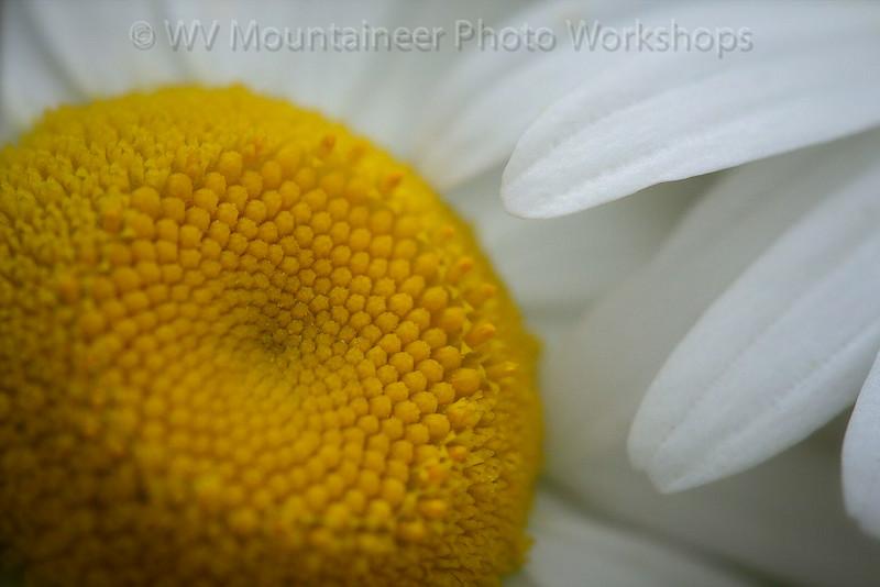 Flower - Snow Shoe West Virginia